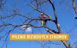 pilenie-rizikovych-stromov.jpg